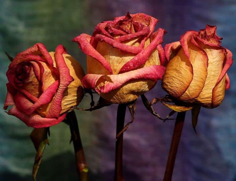Çiçek Gönderiminde Müşteri Memnuniyetini Yaşayın